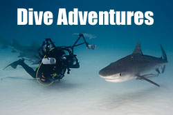 Diving adventure trips with Jonathan Bird