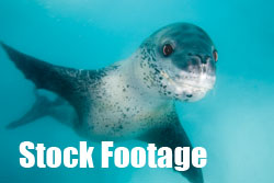 Underwater stock footage by Jonathan Bird Productions