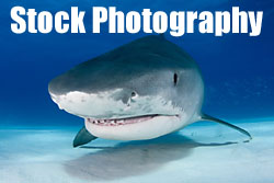 Underwater stock photography by Jonathan Bird